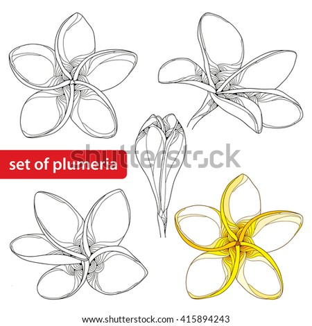 Vector set with ornate Plumeria or Frangipani flower and bud in black and in color isolated on white background. National flower of Laos and Bali. Floral elements in contour style for summer design.  - stock vector