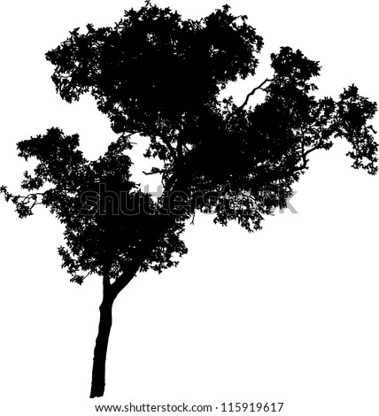 Vector silhouette of a tree - stock vector