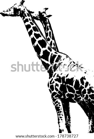 Vector silhouette of Giraffe scientifically known as Giraffa Camelopardalis.  - stock vector