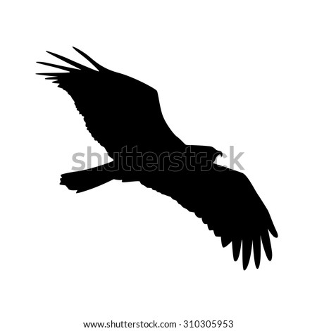 Vector silhouette of the Bird of Prey in flight with wings spread. - stock vector