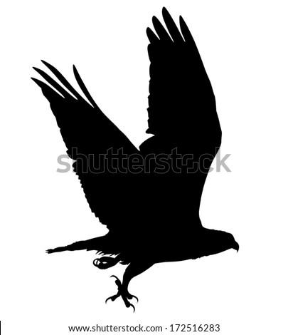 Hawk In Flight Silhouette Flying Hawk Silhouette Vector