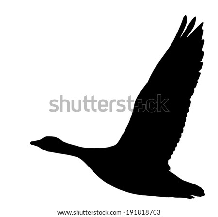 Vector silhouette of the goose in flight. - stock vector
