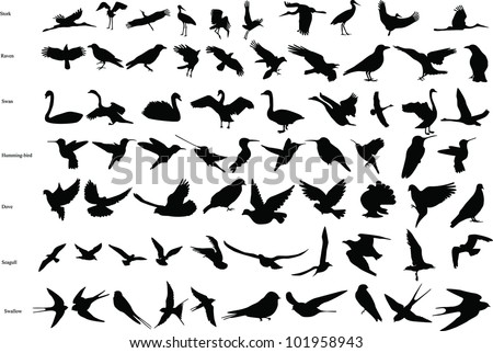 Vector silhouettes of storks, crows, doves, hummingbirds, swallows, swans and seagulls - stock vector