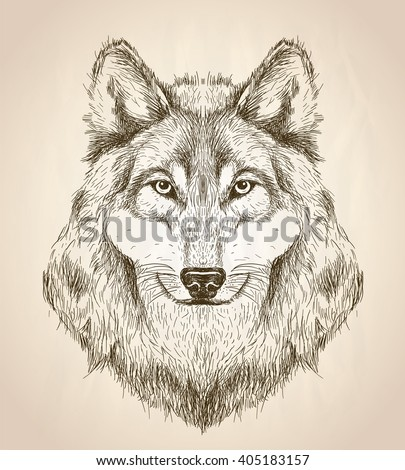 Vector sketch illustration of a wolf head front view, black and white vector wildlife design. - stock vector