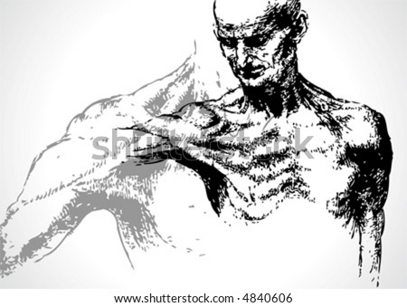 vector Sketch of a male adult, anatomic II - stock vector