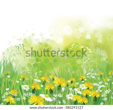 Vector spring, nature background with chamomiles and dandelions. - stock vector