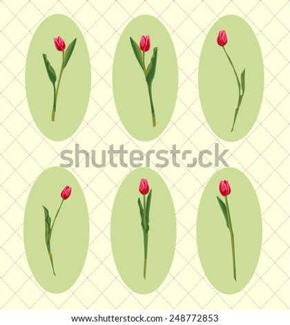 Vector Spring Tulips Card Elements Isolated Set - stock vector