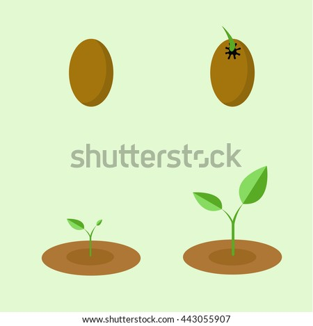 Vector step of plant from seed to growth - stock vector