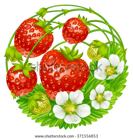 Vector strawberry round composition isolated on white background - stock vector