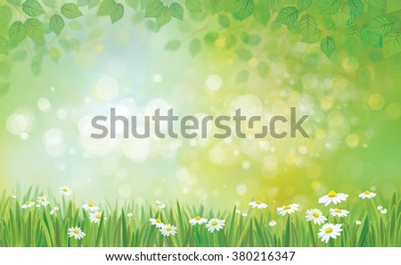 Vector summer background, leaves border and grass with chamomiles. - stock vector