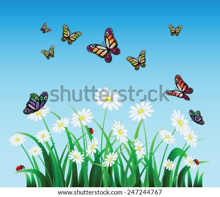 Vector Summer landscape, Daisies in the meadow - stock vector