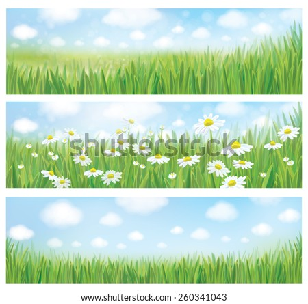 Vector summer landscapes, blue sky , meadow and chamomiles. - stock vector
