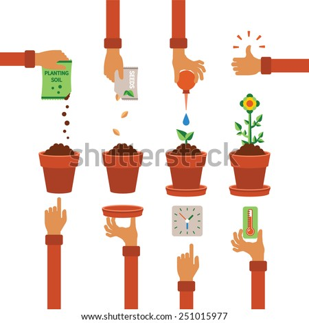 Vector timeline infographic concept of planting process in flat design - stock vector