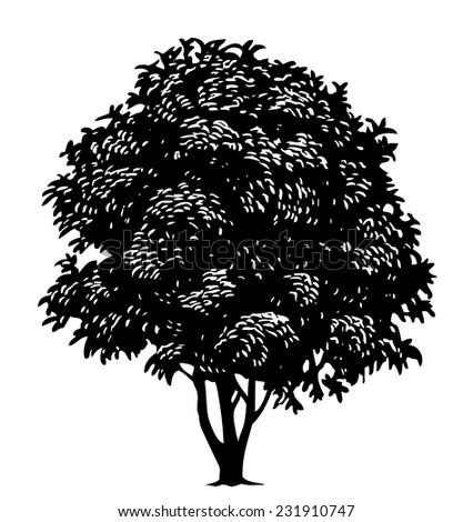 Vector tree in engraved style - stock vector