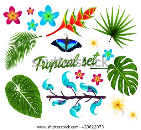 Vector tropical set, jungle leaves set, plumeria, tropical flowers. Butterfly. isolated on white background. Vector illustration.  - stock vector