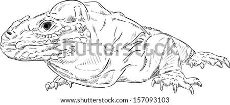 vector - Varan ( Komodo dragon ) , isolated on background - stock vector