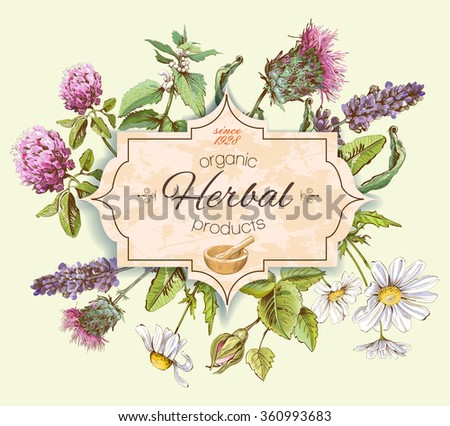 Vector vintage banner with wild flowers and medicinal herbs. Design for cosmetics, store, beauty salon, natural and organic, health care products.Can be used like a logo design - stock vector
