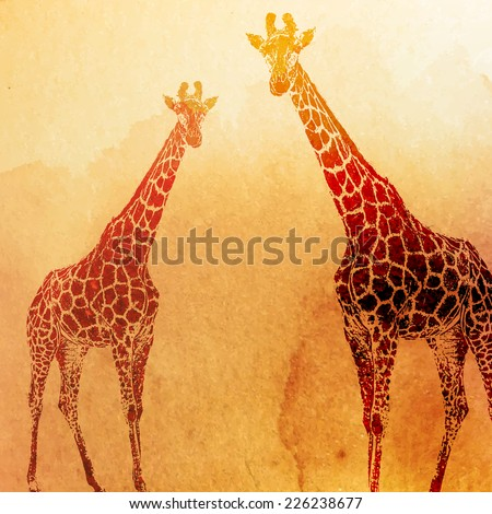 vector vintage illustration of  watercolor giraffes on the old paper texture - stock vector