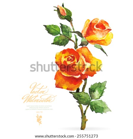 Vector watercolor flower on white backdrop. Isolated beautiful orange roses. - stock vector