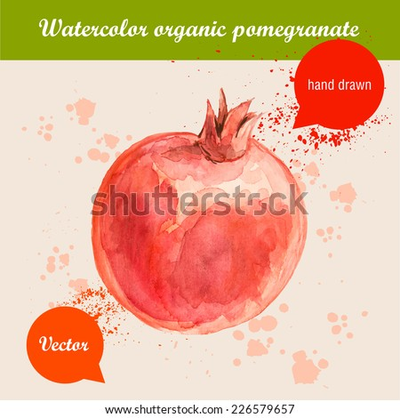 Vector watercolor hand drawn red pomegranate with watercolor drops. Organic food illustration. - stock vector