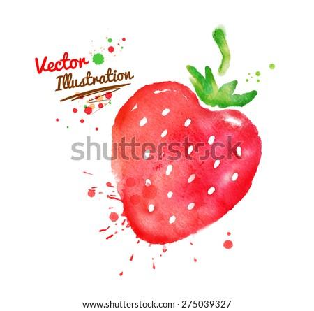 Vector watercolor hand drawn strawberry. - stock vector