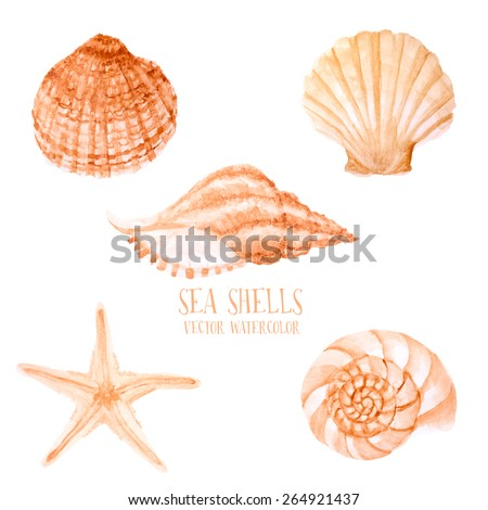 Vector Watercolor sea shells. Hand paint starfish, scallop, shell, conch, mollusk. Summer holidays design elements. - stock vector