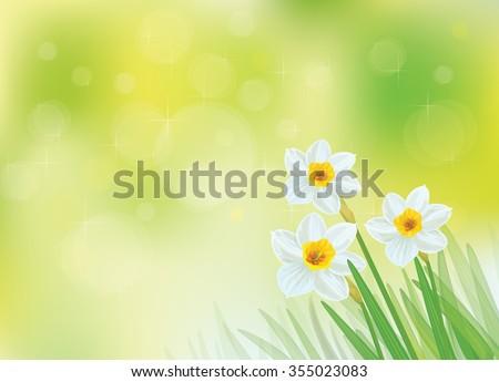 Vector white daffodil flowers on green, bokeh background. - stock vector
