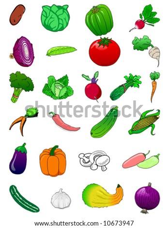 vegetables - vector - stock vector