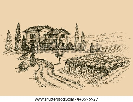 Vineyard drawing. Traditional farm sketch - stock vector