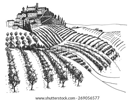 vineyard landscape ink pen picture - vector - stock vector