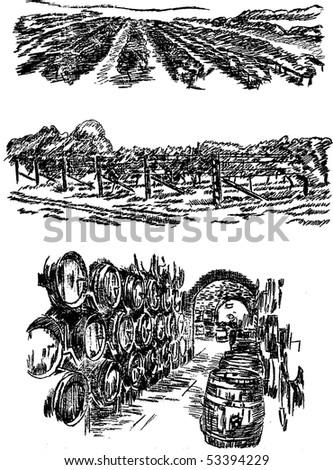 Vineyards and cellar . Hand pencil sketch. - stock vector