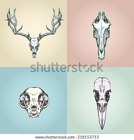 Vintage aged cat skull on a flowers background. Vector illustration, EPS 10. Contains transparent objects - stock vector