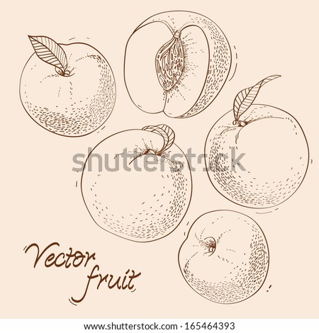Vintage background with fruit - stock vector