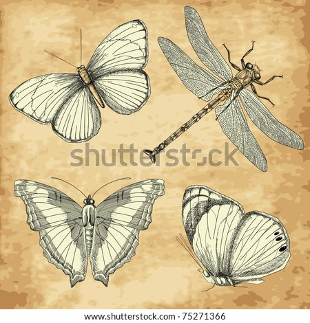 Vintage Butterfly collection - stock vector