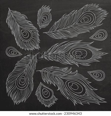 Vintage Feather vector set. Hand drawn chalk board illustration. - stock vector