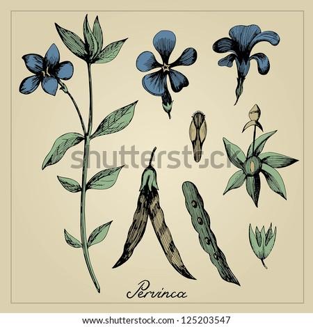 Vintage flower illustration - stock vector