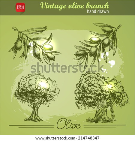 Vintage hand drawn set of olive branch tree and bottle. Sketch style. Watercolor grunge background. - stock vector