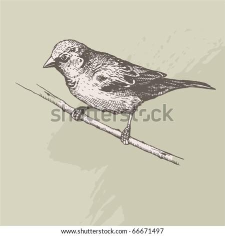 vintage hand drawn - sparrow - stock vector