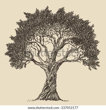Stock Images similar to ID 80786878 - tea tree oil has ...