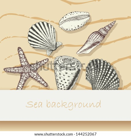 Vintage sea shell background. Beautiful marine card with cockleshell and starfish - stock vector