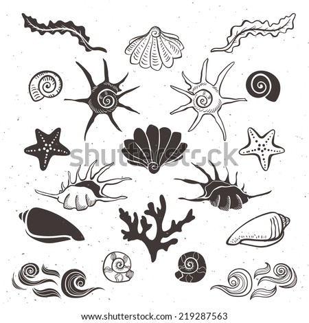Vintage sea shells, starfish, seaweed, coral and waves. Hand drawn decorative elements on white background. - stock vector