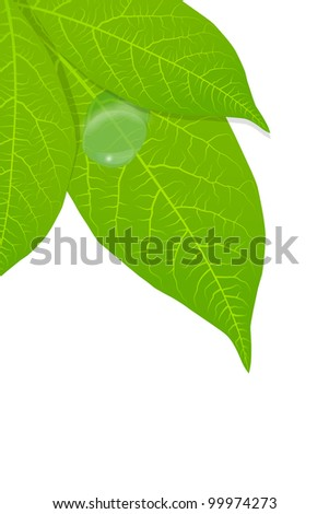 Water drop on green leaves background vector - stock vector