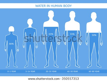 Water in human body. The man at different ages - stock vector