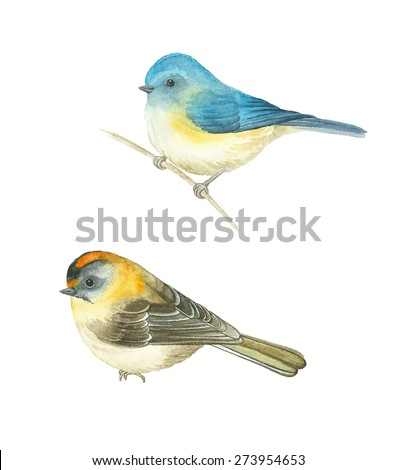 Watercolor birds Red-flanked bluetail (Tarsiger cyanurus) and Common Firecrest (Regulus ignicapilla), vector illustration. - stock vector