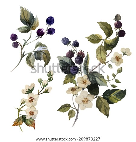 watercolor, blackberries, painting - stock vector