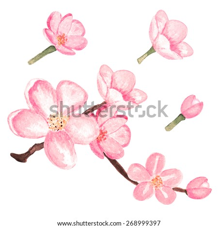 Watercolor branch blossom sakura, pink cherry tree, flowers set closeup isolated on white background. Hand painting on paper - stock vector