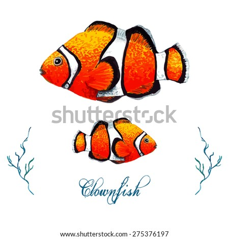 Watercolor Clownfish, isolated on white background. Tropical fish card, postcard & invitation. Elegant concept for Aquarium, Swimming Lessons, Diving courses & Eco Tourism. Element for your design. - stock vector