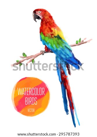 Watercolor exotic bird isolated on white background. Vector illustration - stock vector