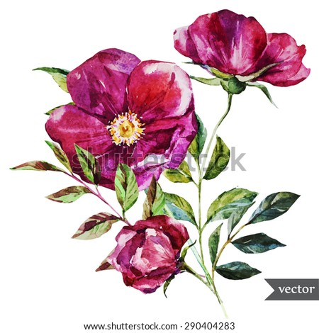 watercolor floral print rose, botanical illustration, print card,isolated object - stock vector