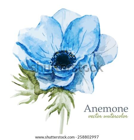 watercolor, flowers, anemones, blue, spring - stock vector